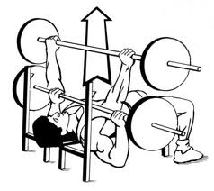 Image result for flat bench press