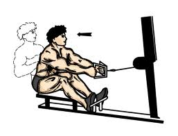 seated pulley rows for back muscles