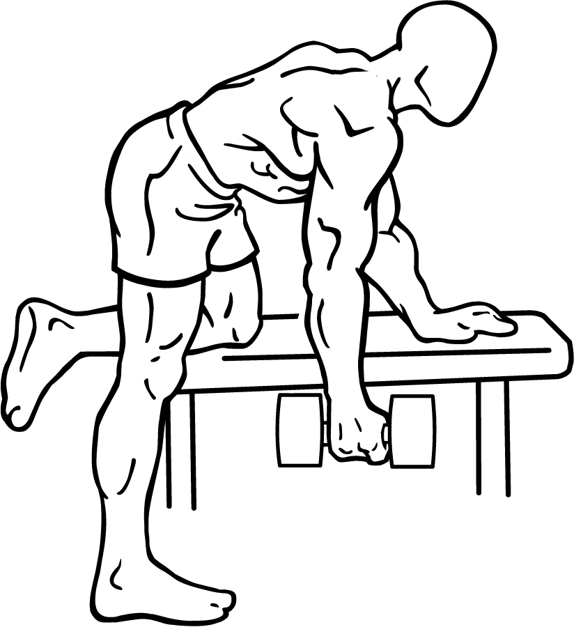 Dumbbell Rows Back Exercise