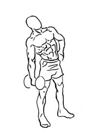 dumbbell lateral flexion