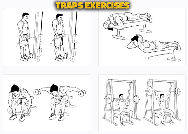 Traps Exercises Alternatives